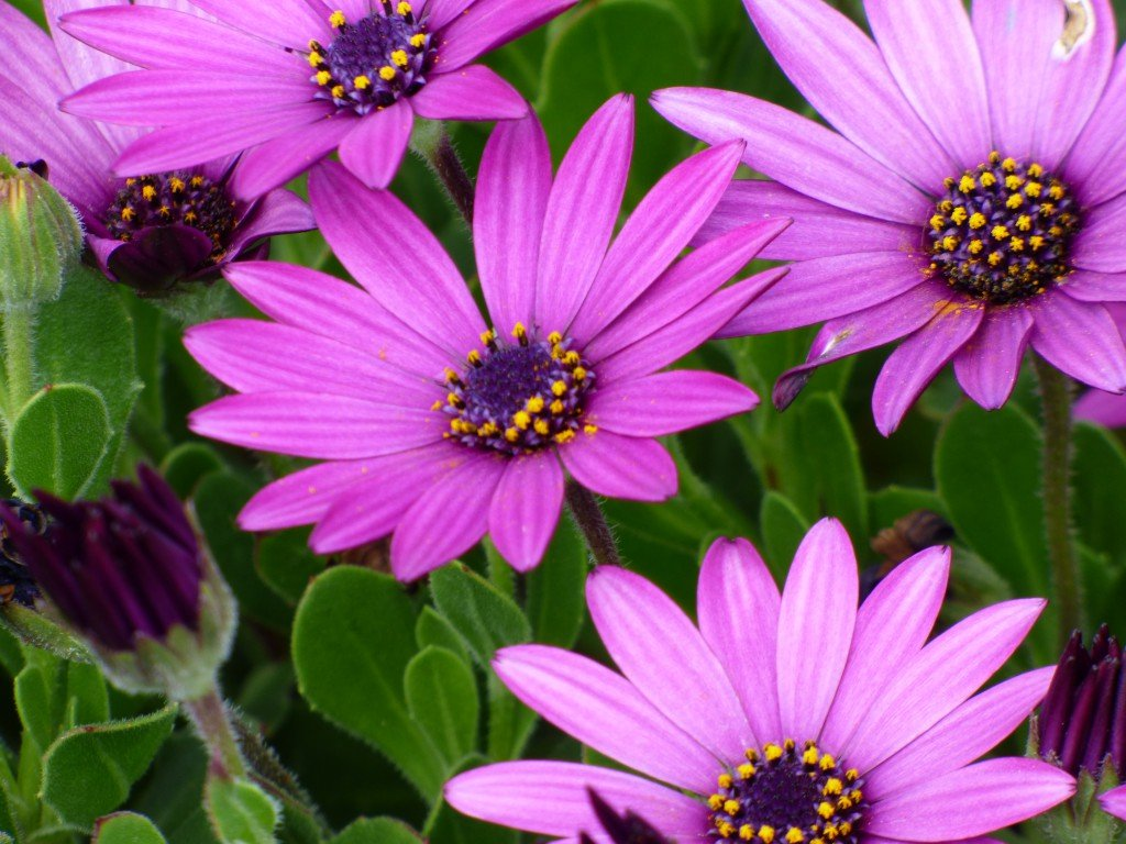 Australia coastal wild flora